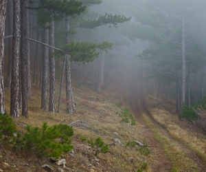 Crimean forest