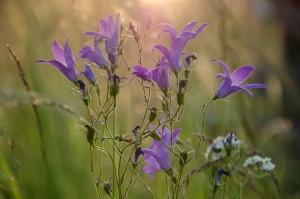 Лесные цветы. Карпаты