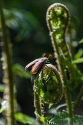 Папоротник и жук