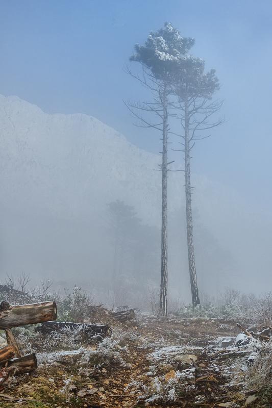 Февральский лес, Алупка