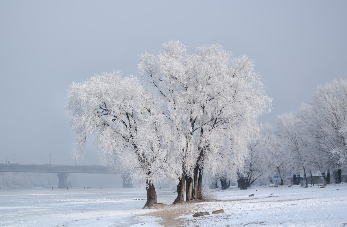 Winter in city. Frosty day and frozen trees in ice.